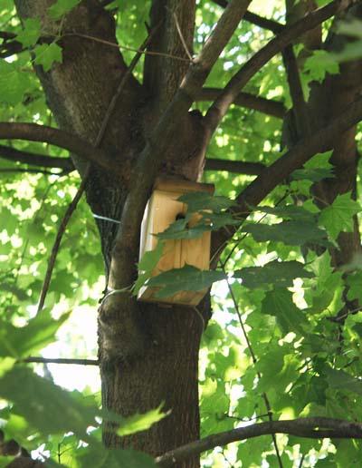 Фотография малого синичника в кроне дерева.