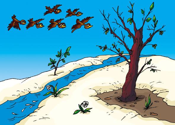 Картинки леса весной для детей